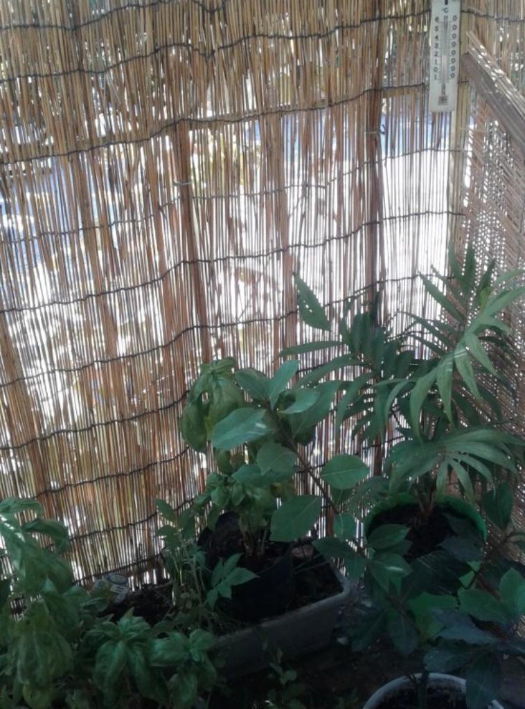 exemple de plantation sur terrasse