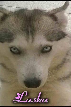 Les Femelles Ancestral Wolves
