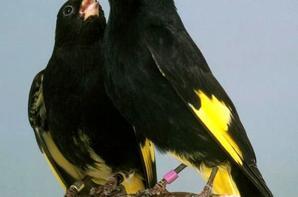 Superbe oiseaux !!