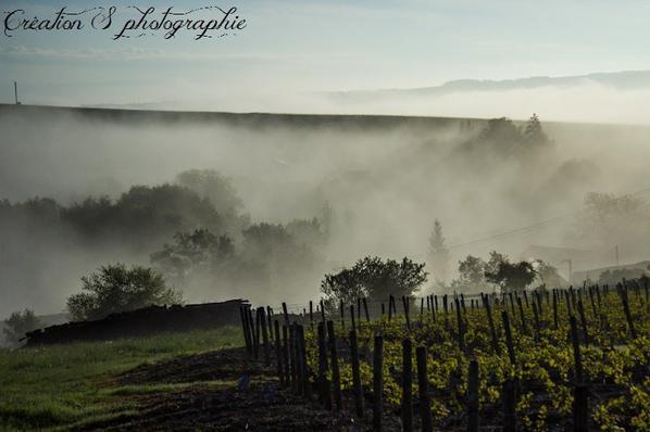 un petit matin de brume II