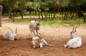 Zoo de lunaret <3