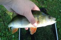 pêche a la carpe cette après midi :)