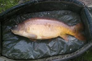 première pêche a la carpe le dimanche dernier