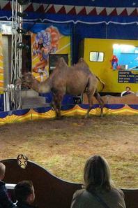 J ai été au cirque