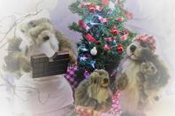 Magnifique vitrine de Noël le 6/12/2018