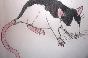 Les Rats ( en dessin Hyper mal fait xD)