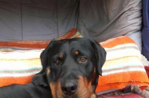 Mon chien ^-^