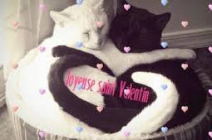 coucou a tous et a toutes je voulais vous souhaite une bonne st valentin a tous !!!!!