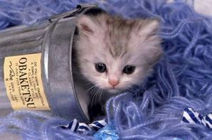 chatons son trop kawaiiiii