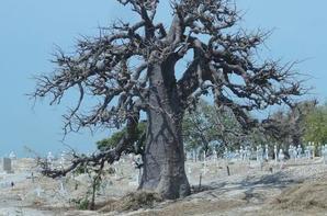 L'île des coquillage de Joal Fadiouth au Sénégal