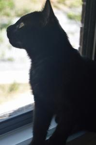 Il ne faut pas juger un chat sur leur apparence