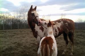 L'équitation Est Un Sport Pas Comme Les Autres