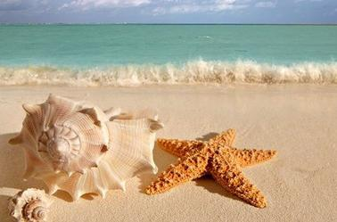 Si tu trouves sur la plage Un très joli coquillage Compose le numéro Océan 00  Et l'oreille à l'appareil La mer te racontera Dans sa langue des merveilles