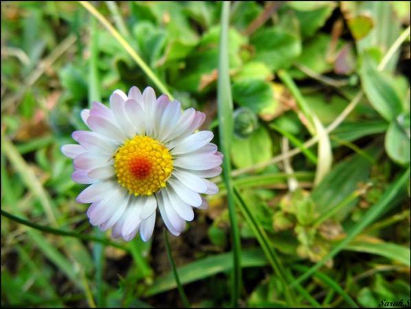 Fleurs et plante