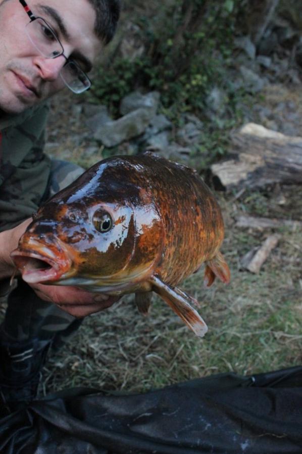 Encore une petite journée au bord de l'eau! Les 3 plus beaux poissons sur les 7 de cette journée!!