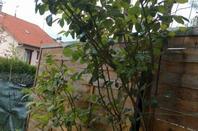 me plantations