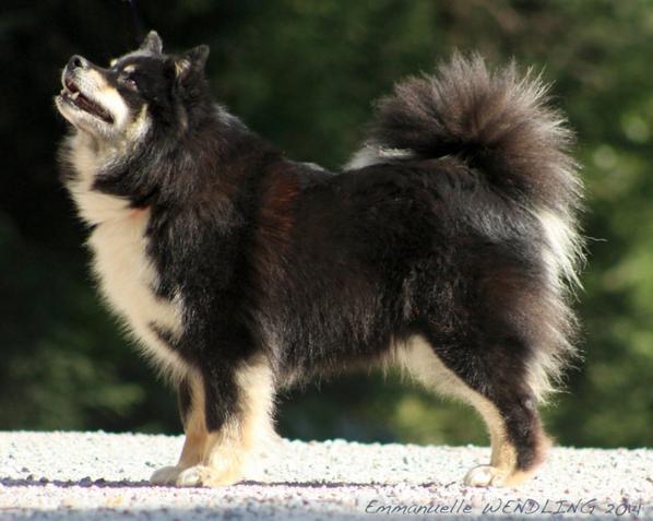 World Dog Show à Helsinki (Finlande) : Daana 3ème en classe Champion!!!!