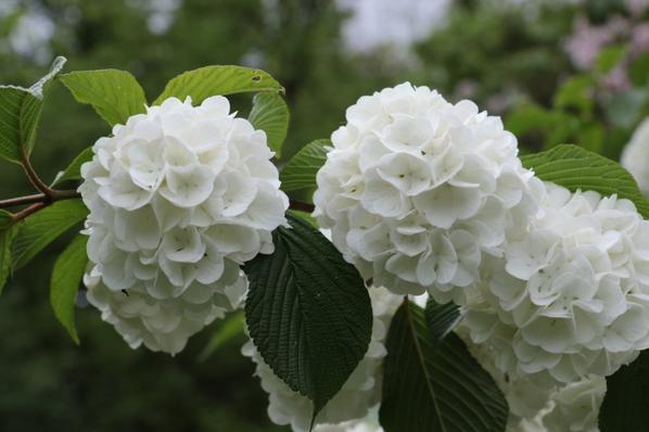 Fleurs au jardin public 33