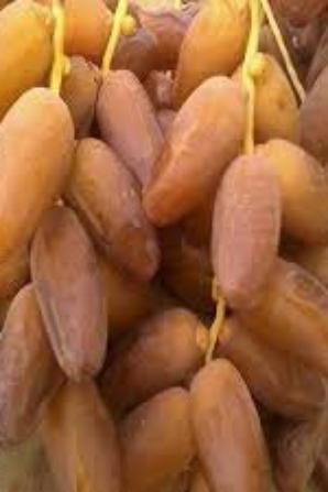 datte algerienne
