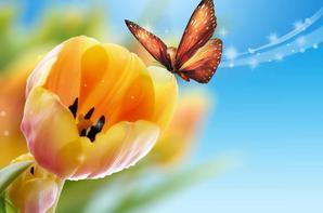 papillons, je t'aime