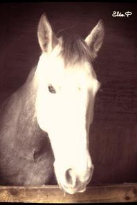 J'aime un cheval pour ce qu'il est, mais pas pour sa beauté contrairement à certaines personnes ♥