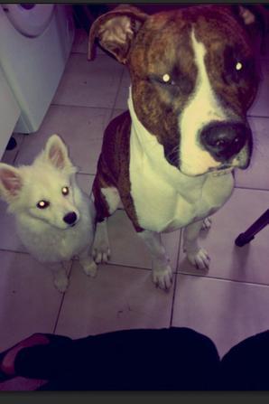 Milane&Kenzo