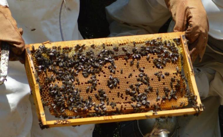 Nouvelle experience avec L'apiculture