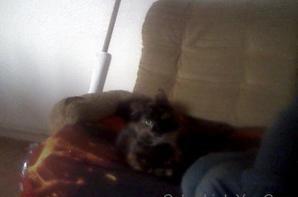 ma chatte au réveille