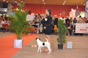 BRUSSELS DOG SHOW