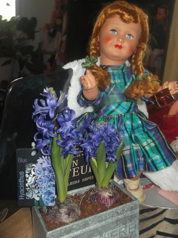 Ma petite Bella en terre de pipe , tres ancienne , vous souhaite un tres beau 3 decembre , et elle vous offre le merveilleux parfum de ces hyacinthes