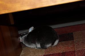 Un lapin qui ne saute pas