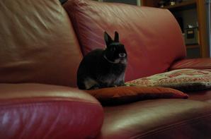 L'histoire d'amour entre un coussin et un lapin