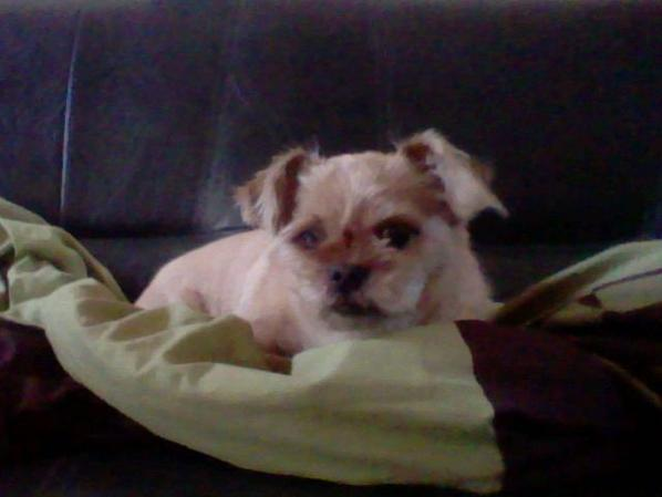 mon chien tondu ^^