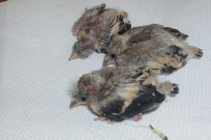 2012 breeding.