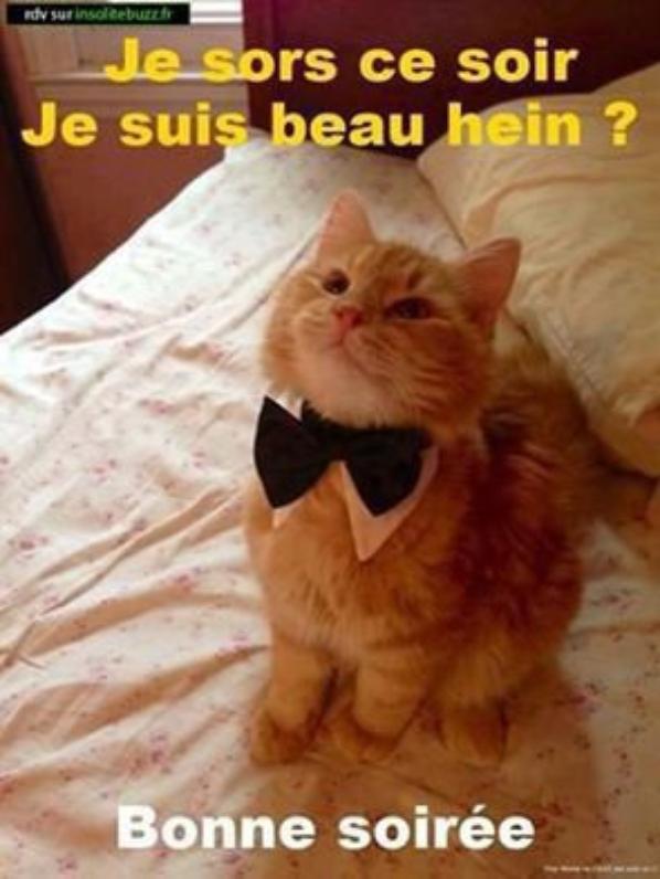 Très bon Weekend à tous.....Trop beau et bien sérieux le petit chat quand il est de sortie ! !
