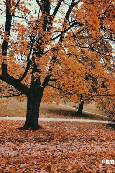 ♣ Autumn II. ♣
