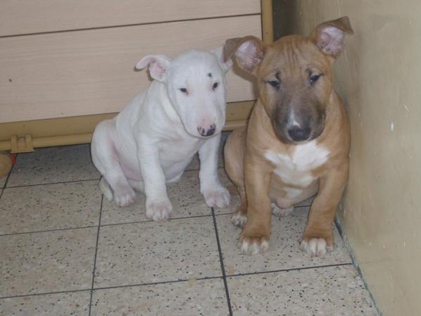kiko et kiara,a deux mois et demi.