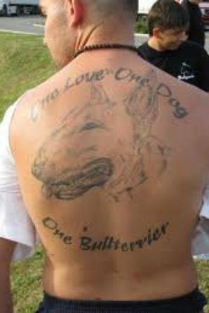Voici d autre passionner du bull terrier !!!!