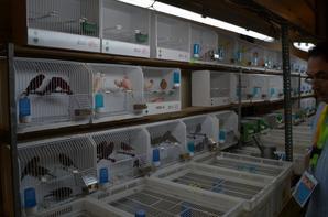 la salle et quelques vendeurs d oiseaux