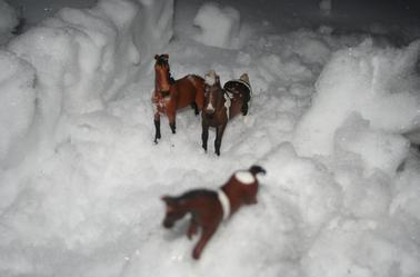 Oh de la neige... 4
