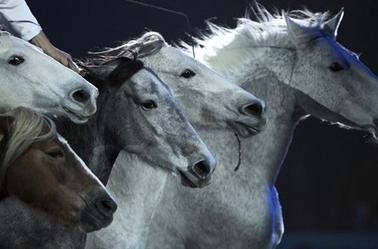 Le Spectacle Equestre