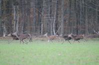 harde non de chasse 30-11-2013