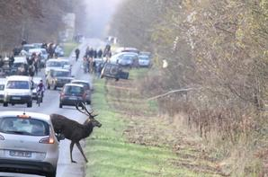 chasse a courre 14-12-2013