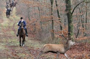 chasse a courre compiegne  26-12-2013