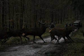 chasse a courre 08-02-2014
