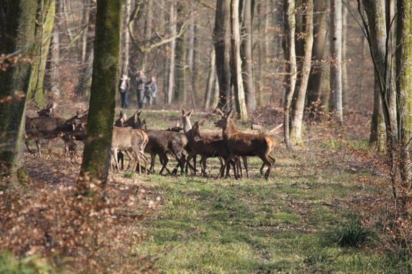 chasse a courre 08-03-2014