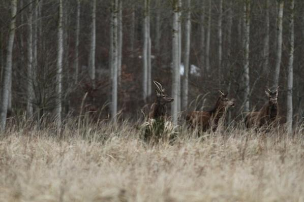 chasse du 21-02-2015