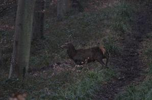 chasse du 17-02-2015