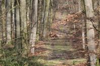 chasse du 03-03-2015
