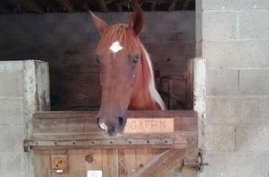 mon cheval gitan